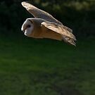 Barn Owl Flight by M S Photography/Art