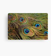 Peacock Feathers Canvas Print