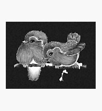 Feathered Friends with Charcoal Photographic Print