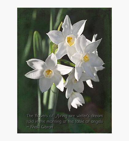 Sweet harbingers of spring Photographic Print