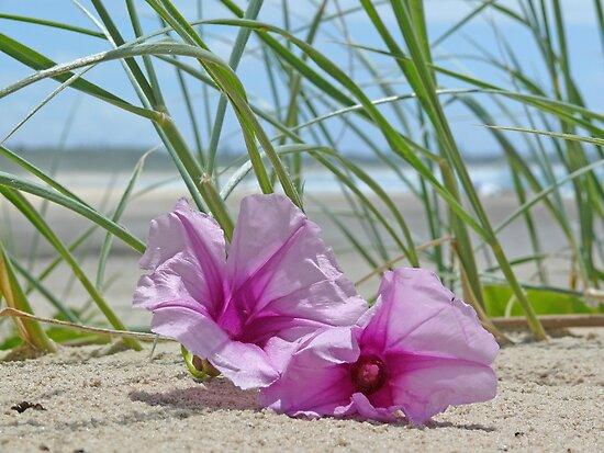 Flowers on a beach by chunkymonkey