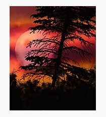 Fire coloured sky landscape with black tree  Photographic Print