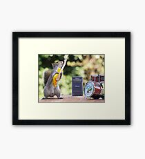 Rock and roll squirrel with guitar Framed Print