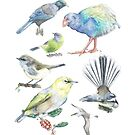 Compilation of New Zealand Birds by avirens