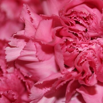 Pink flower by chunkymonkey