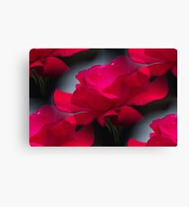 rose in the garden Canvas Print