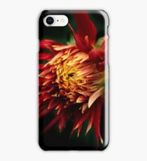 Flaming Dahlia iPhone Case/Skin