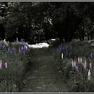 Light on the Lupine Path by Wayne King
