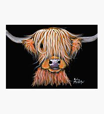 HIGHLAND COW ' PEPSI ' By Shirley MacArthur Photographic Print