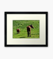 caballos  Framed Print