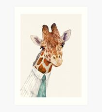 Male Giraffe Art Print