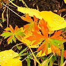 Autumn close up by Linda Sparks