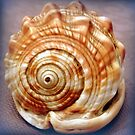 Natural spirals in a seashell by bubblehex08