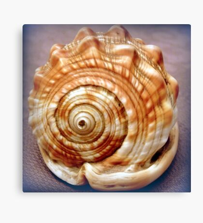 Natural spirals in a seashell Canvas Print