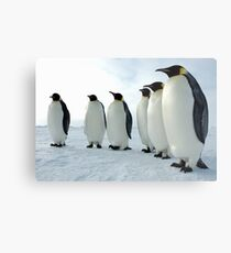 Lined up Emperor Penguins Metal Print