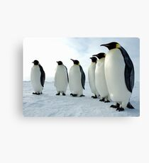 Lined up Emperor Penguins Canvas Print