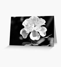 Bahama Rose ( Black & White) Greeting Card