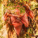 banana tree spirit... by Wieslaw Jan Syposz