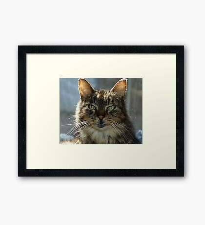 Daffy Framed Print