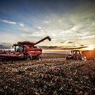 Harvesting at Sunset by Steve Baird