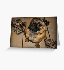 *•.¸♥♥¸.•*DON'T U BE CALLING ME SQUARE - PUG PICTURE - CARD*•.¸♥♥¸.•* Greeting Card