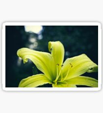 A Study In Lilies - VIII Sticker