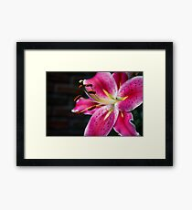 A Study In Lilies - XVIII Framed Print