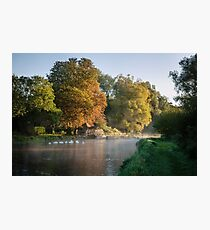 Swans on River Test Photographic Print