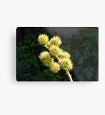 Natural green branch with spikes Metal Print