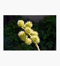 Natural green branch with spikes Photographic Print