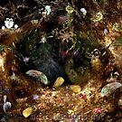 In The Woods by Ingrid Funk