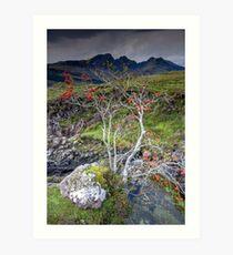 Highland Rowan Tree Art Print