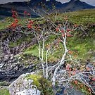 Highland Rowan Tree by Angie Latham