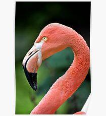 Flamingo Bird Poster