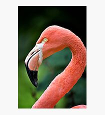 Flamingo Bird Photographic Print