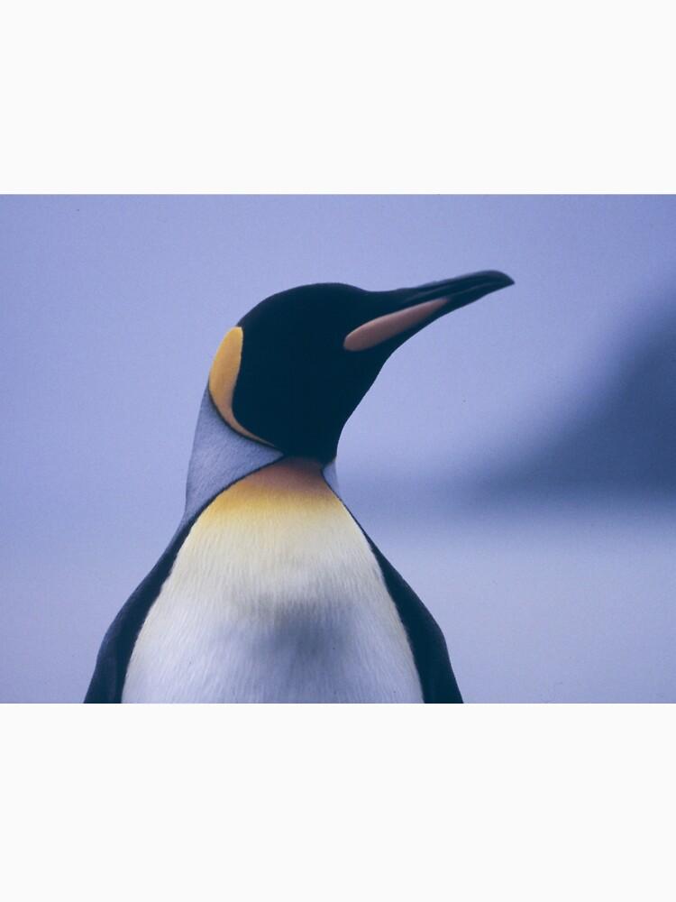King Penguin by BravuraMedia