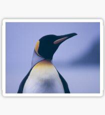 King Penguin Sticker