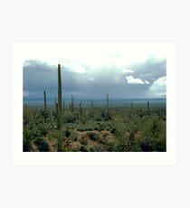 Arizona Desert and Cactuses  Art Print