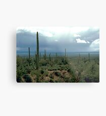 Arizona Desert and Cactuses  Metal Print
