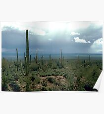Arizona Desert and Cactuses  Poster