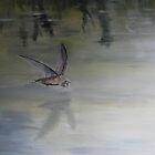 Skimming by andy davis