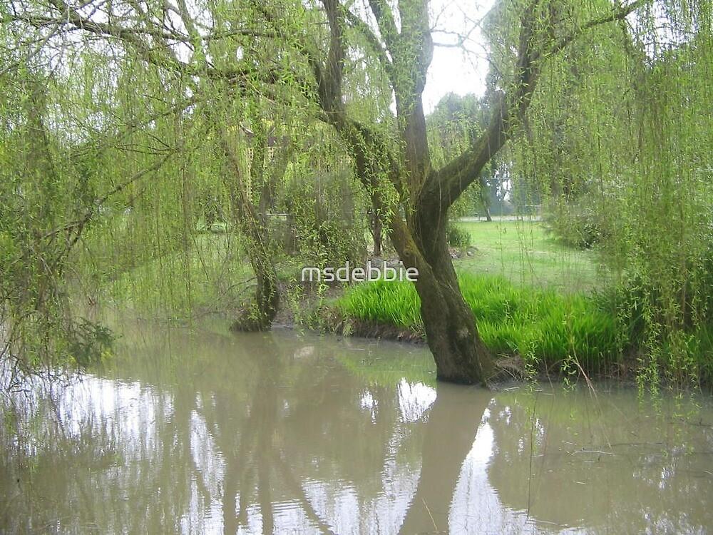 Willow (Blythewood Grange, Ballarat) by msdebbie