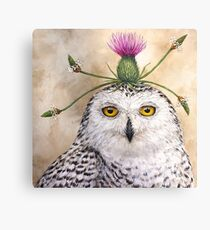 Cleveland, the snowy owl with thistle Canvas Print