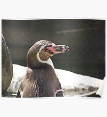 Penguin Poster