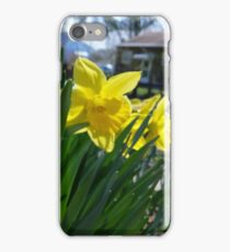 Daffodils in the Summer iPhone Case/Skin