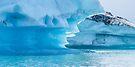 Blue Beauty, Jokulslaron Ice Lagoon, Iceland by Cliff Williams
