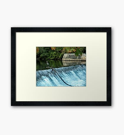 Heron - Looking towards the Future Framed Print