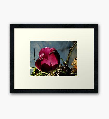 Flower in Glass Framed Print