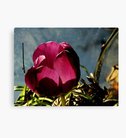 Flower in Glass Canvas Print
