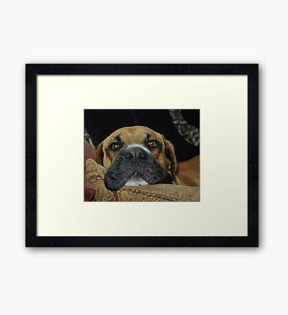 Toshi Framed Print